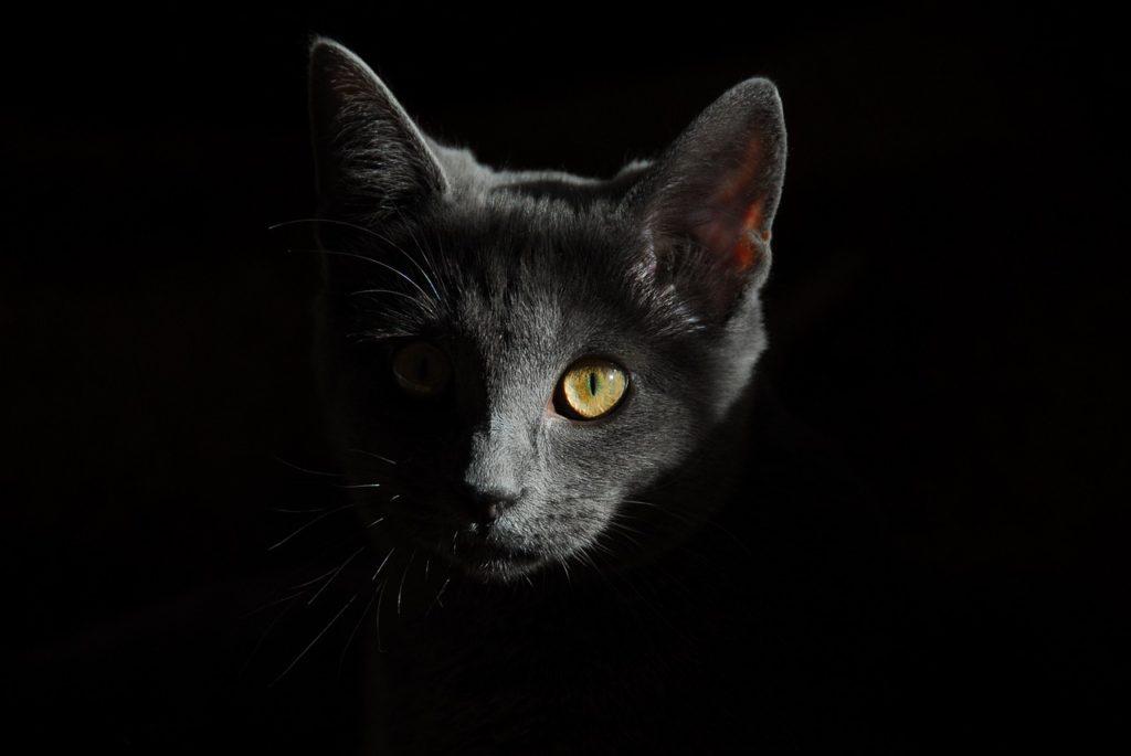 cat-778315_1280